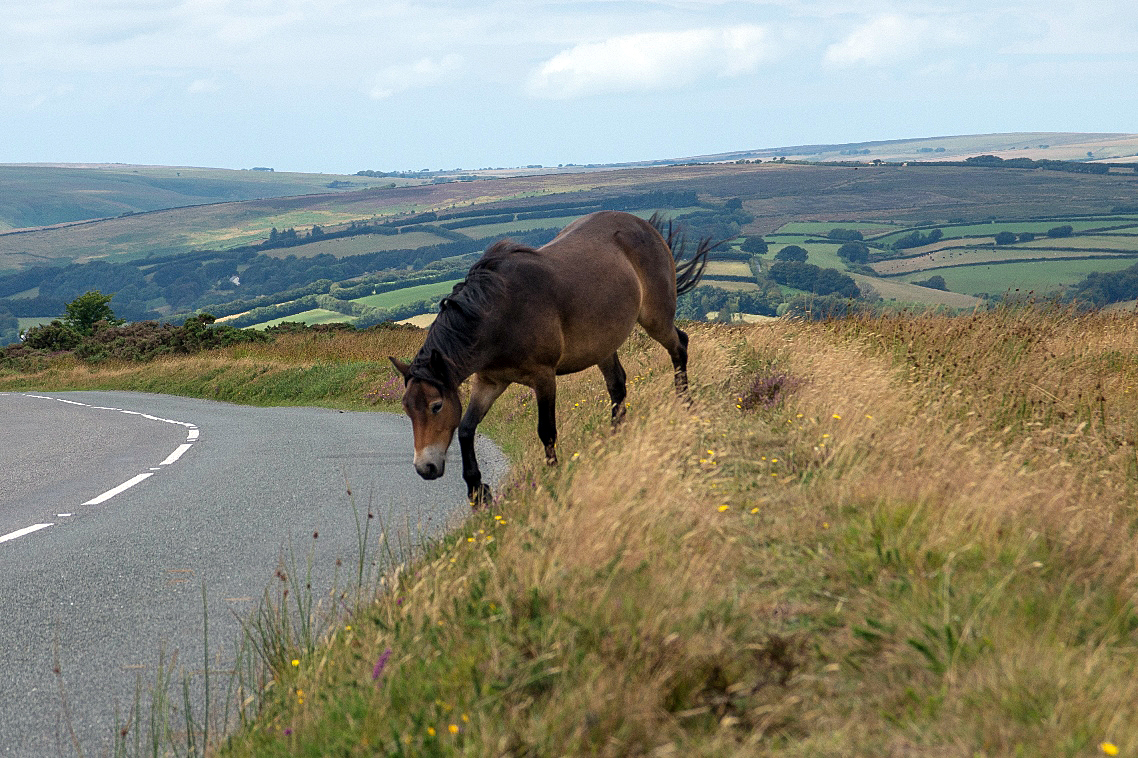 Pony on winsford hill